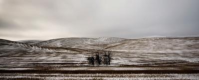 High Desert Winter