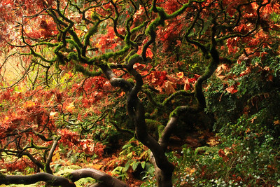 Japanese Garden, Seattle WA