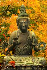 Tokyo Buddha