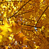 Photograph by Mary Palaskonis<br /> <br /> Chicago Forest Preserve