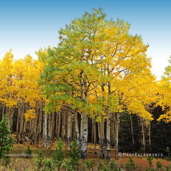 Photograph by Mary Palaskonis<br /> <br /> Colorado