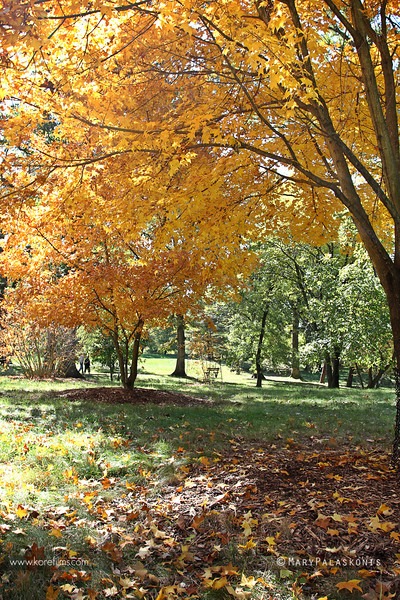 Photograph by Mary Palaskonis<br /> <br /> Morton Arboretum, Illinois