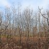 Photograph by Mary Palaskonis<br /> <br /> Kettle Moraine State Forest, Wisconsin