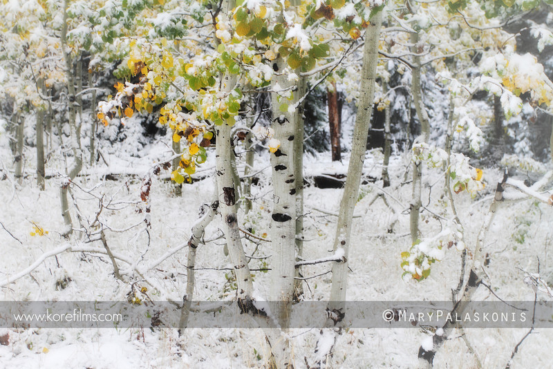 A winter scene in autumn.<br /> Jenny Lake, Grand Teton National Park, Wyoming.<br /> Photo by Mary Palaskonis