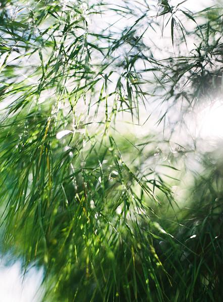Sunlit Leaves 3