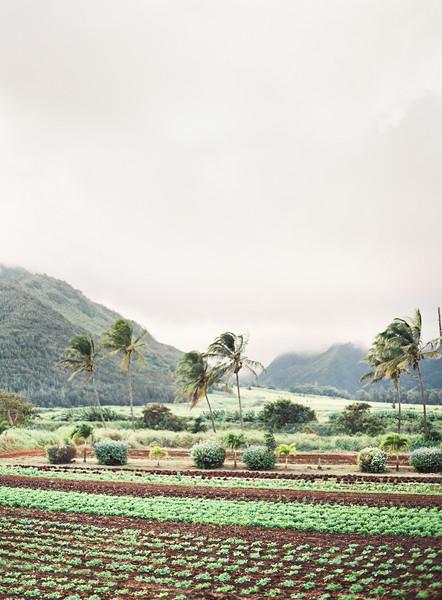 Maui Farm