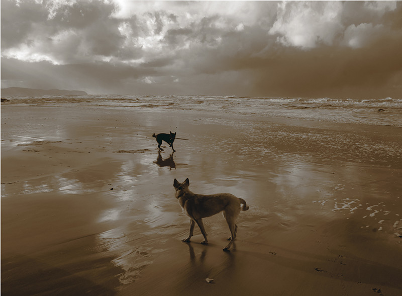Dogs on Oceanside Beach, Oregon