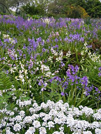 Blue Meadow No. 3