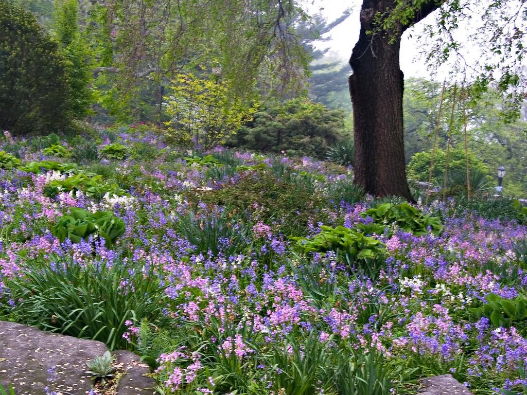 Blue Meadow No. 2