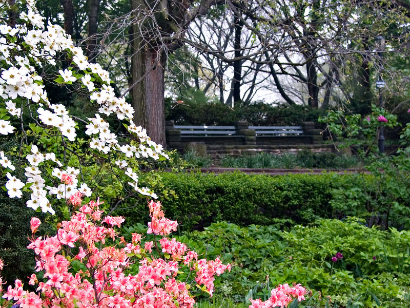 Blooms and Benches No. 1