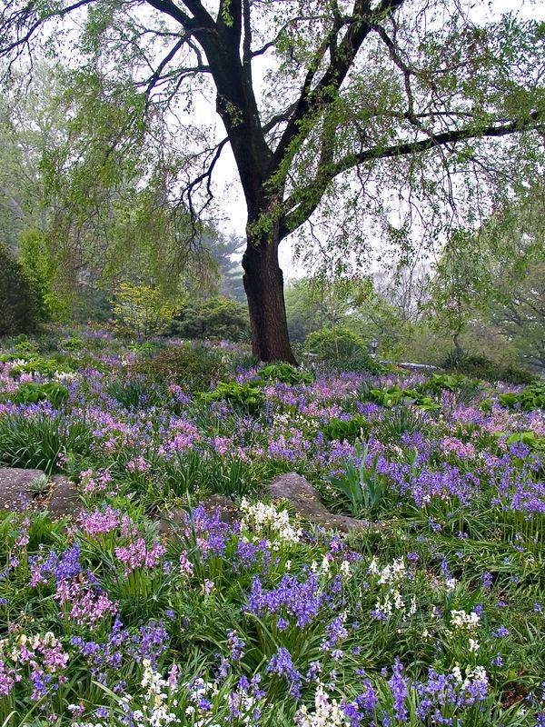 Blue Meadow No. 1