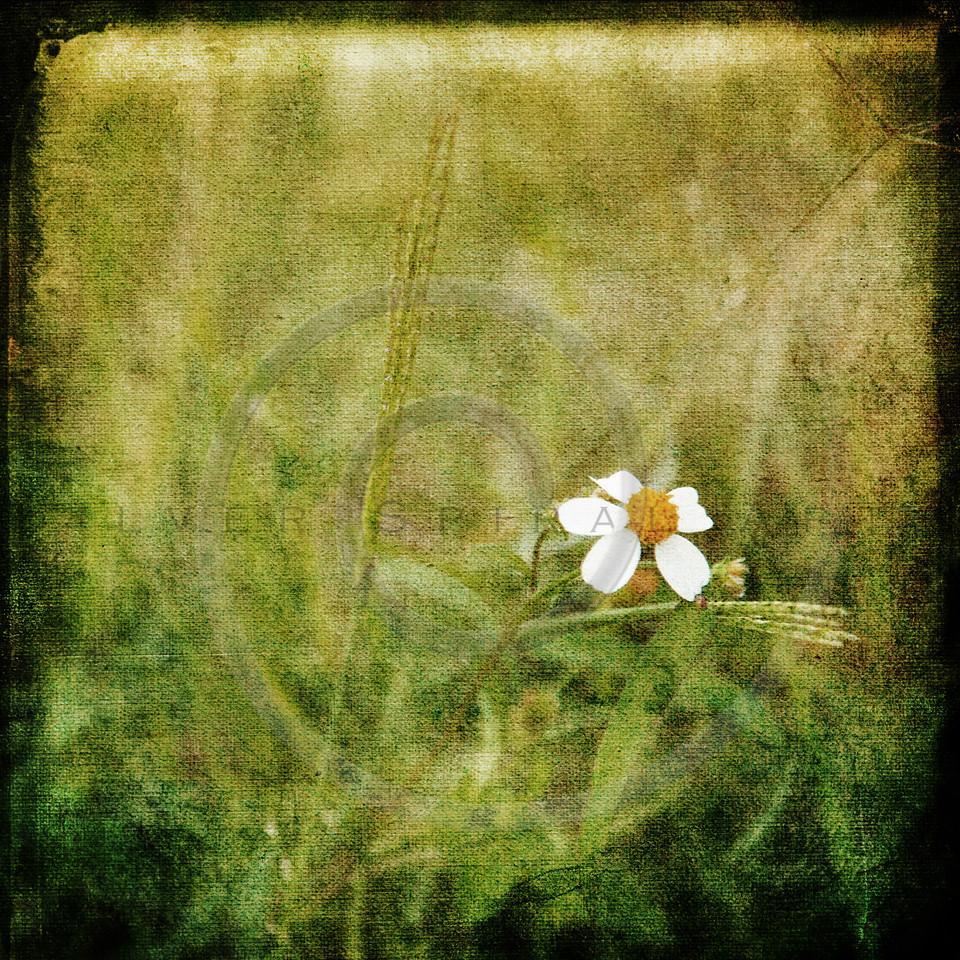 White Wildflower Summer Flower Collage
