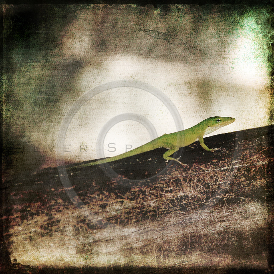 Gecko Green Cameleon Lizard on Brown Wood Branch