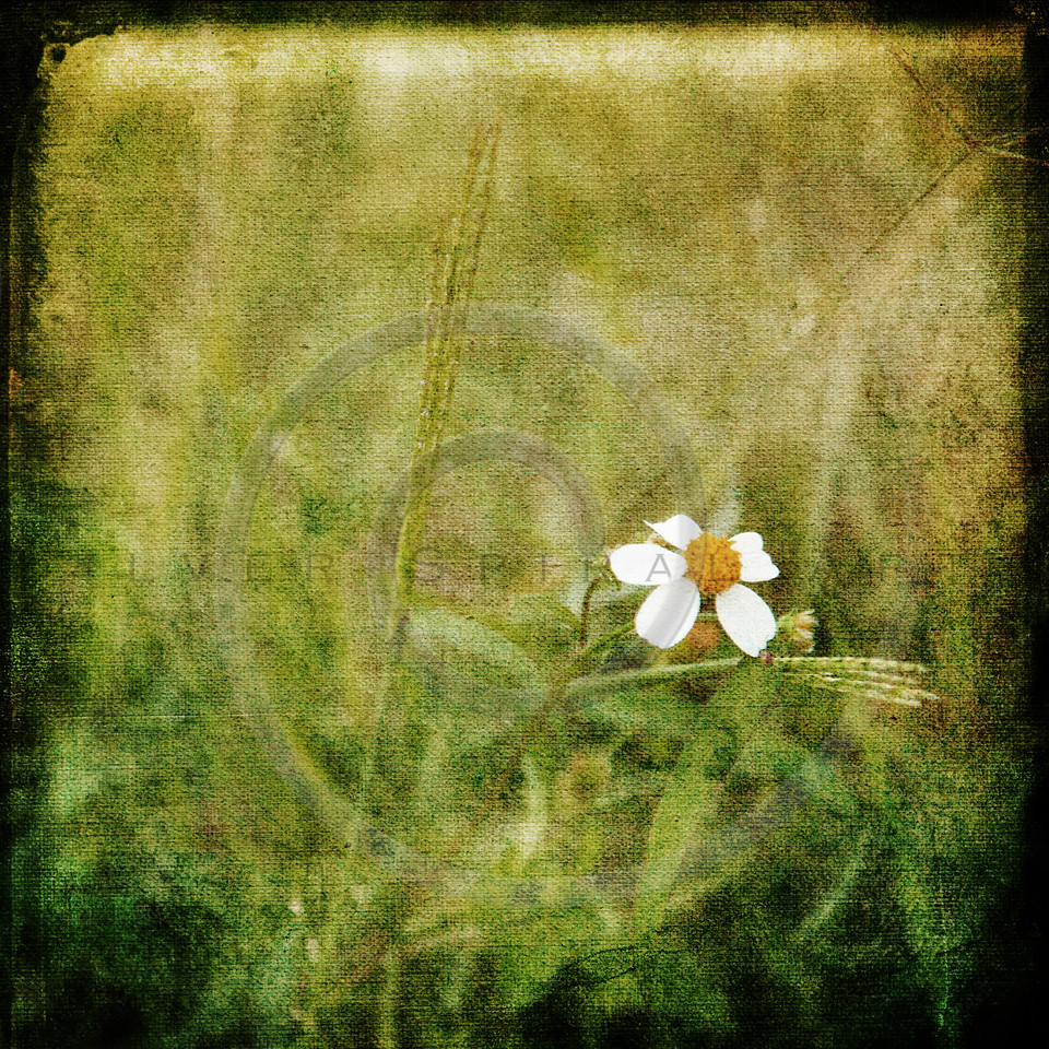 White Wildflower Summer Flower Collage