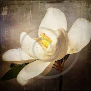 White Magnolia Flower Floral Collage