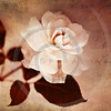 Garden Rose White Flower Vintage Collage Floral