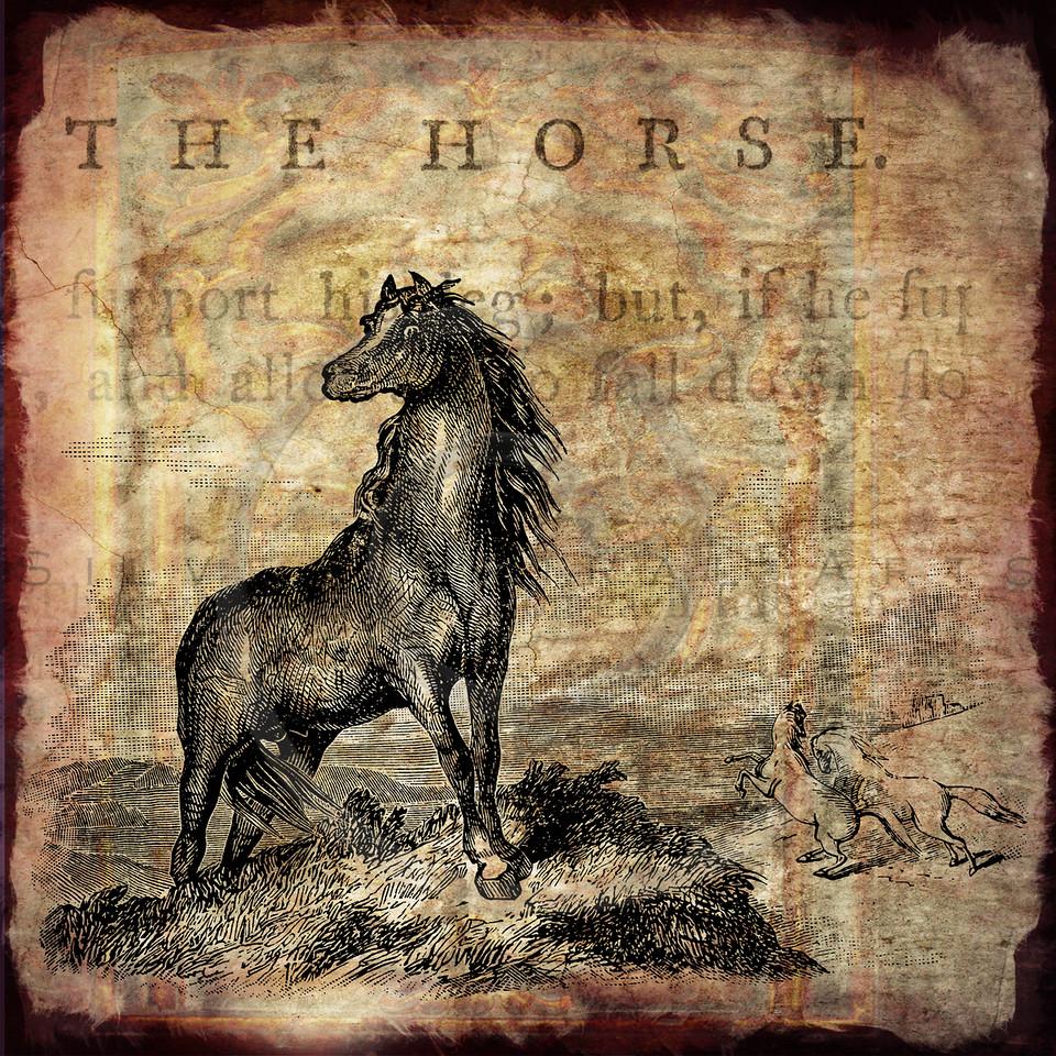 Vintage Horse Antique Parchment Paper Texture Background