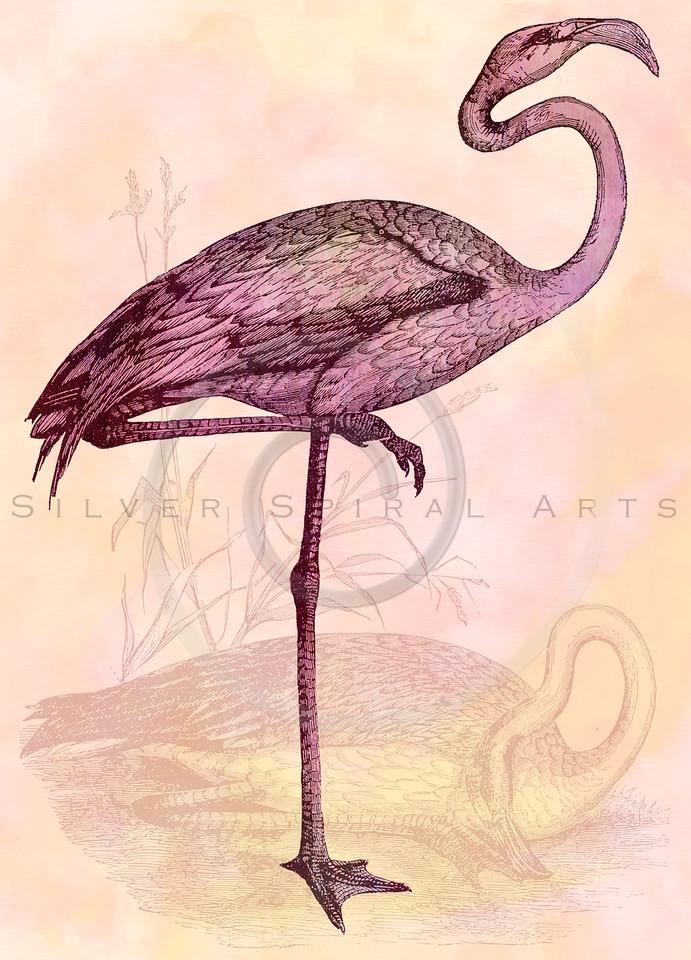 Vintage Pink Flamingo Collage Illustration Retro 1800s Flamingos Watercolor