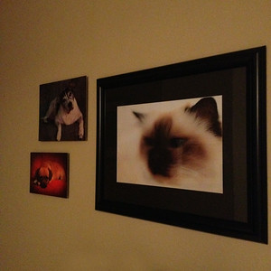 Metal Prints and Matte print in frame (frame not included)