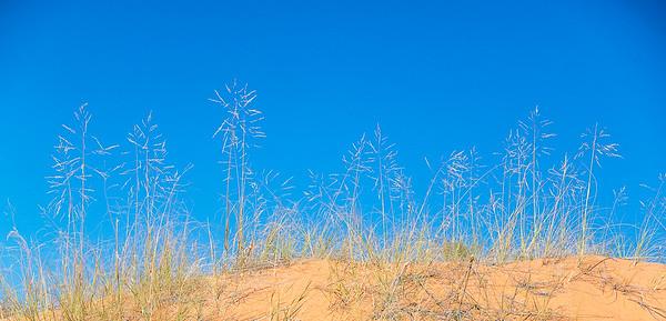 Wild Grasses With Bluebird Sky
