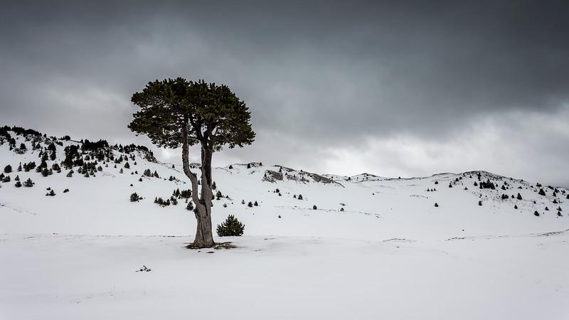 Poor Lonesome Tree