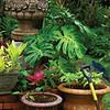 Botanical Garden Scene