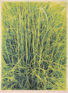 "MAIDEN GRASS, 2001, 16"" x 12"", screen print"