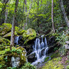 Deep Woods Treasure