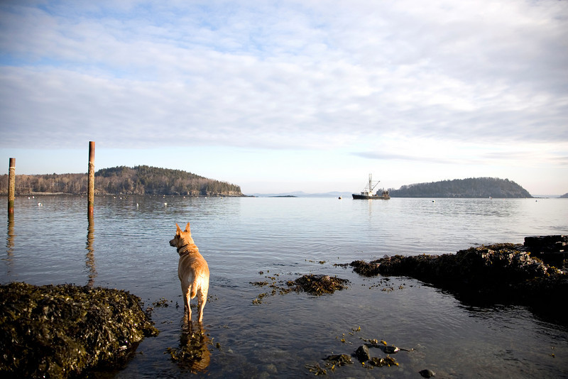 Ahhh....Early morning in Bar Harbor, Maine. That's my dog Sydney and this was in February. She went swimming just after this shot was taken! Brrr... But, she loved it. <br /> Photo by,<br /> Daniel Straine
