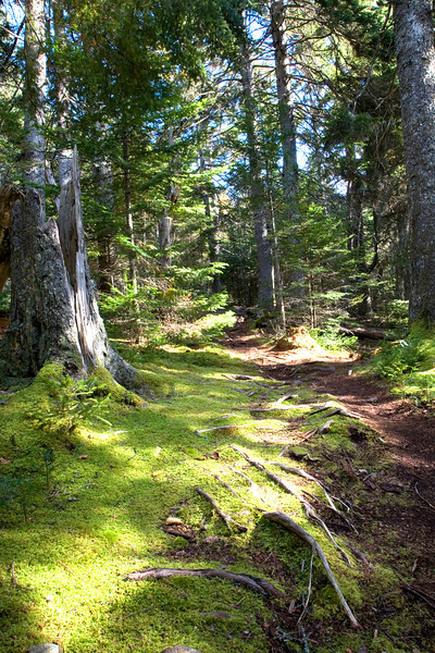A deep woods trail in northern Maine.<br /> Photo by,<br /> Daniel Straine