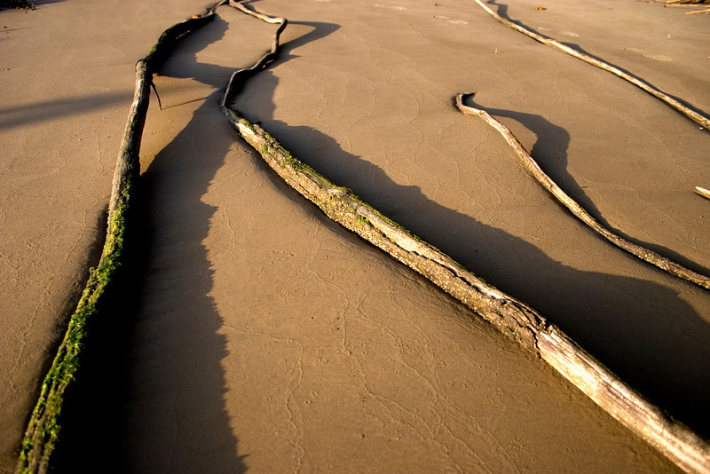 Roots stretch out onto the sand.<br /> Photo by,<br /> Daniel Straine