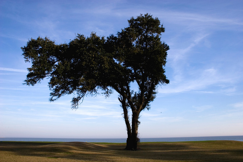 A tree by the edge of the sea.<br /> Photo by,<br /> Daniel Straine