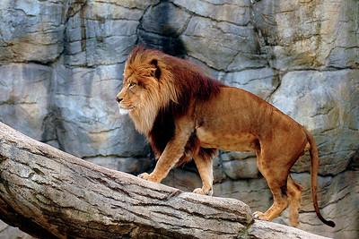 Waco Zoo 3-26-2005