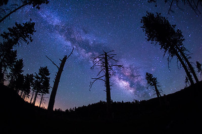 Meadow Milky Way