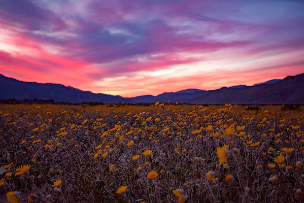 Superbloom Sunset