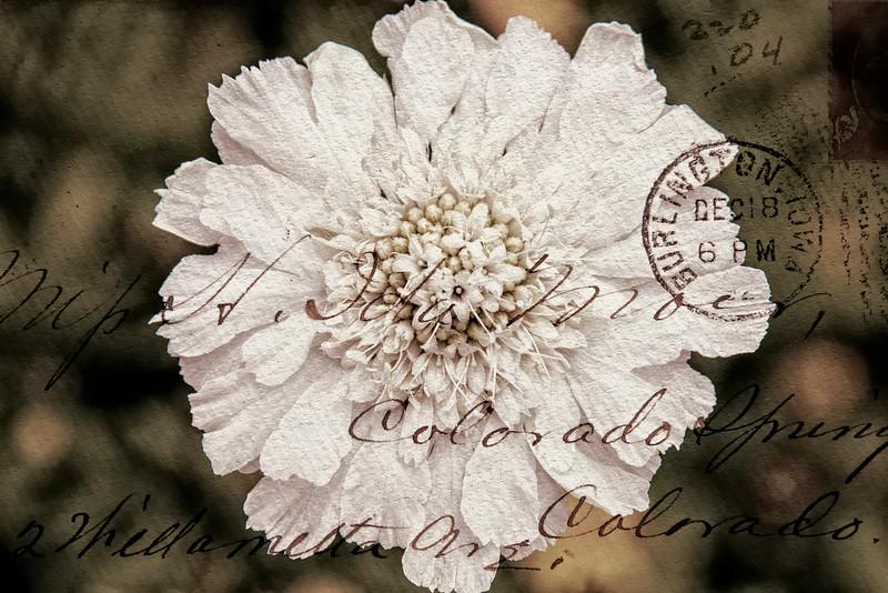Postmark Flower