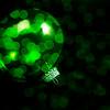 Christmas Green Ornament