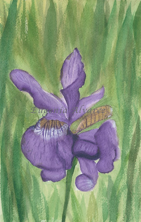 Watercolor iris