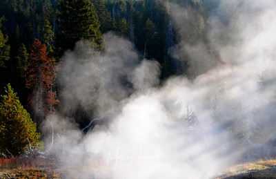 Morning mist from various hot springs, Yellowstone