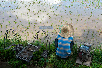 Taking a break from harvesting rice,  China