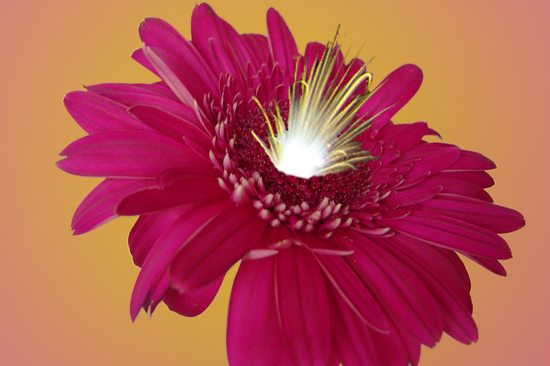 Fire Flower 1