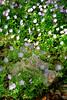 Texas - Austin - Wildflowers 7