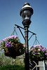 Washington, D C  - Hanging Flower Baskets