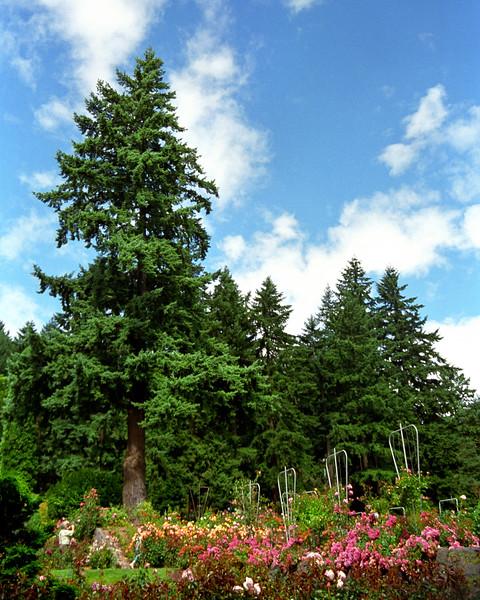 Portland International Rose Garden 1