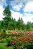 Portland International Rose Garden 2