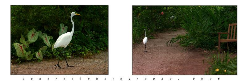 1 - Egret stroll