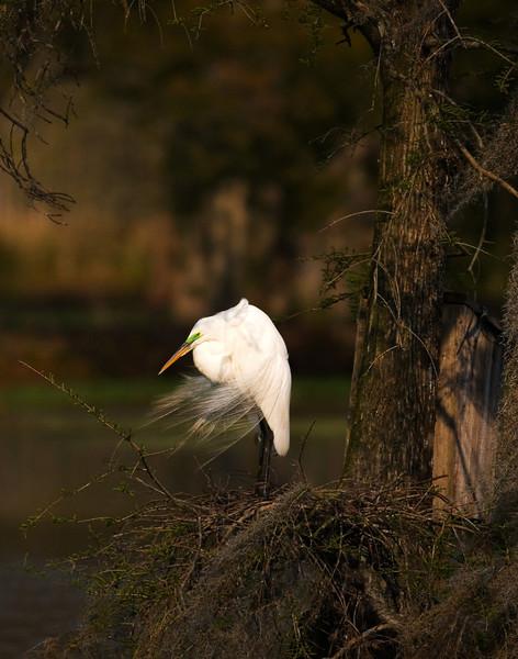 16 - Windy egret