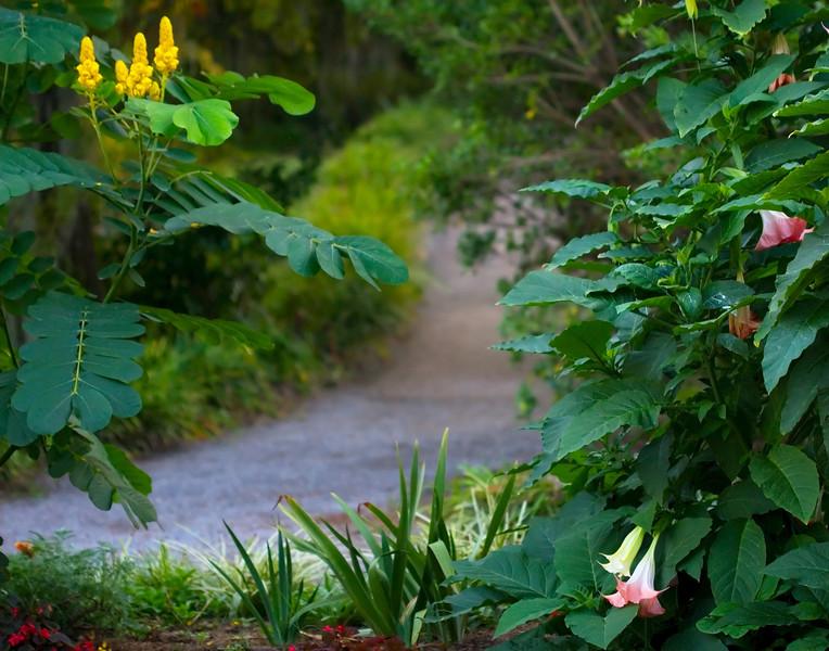 14 - Magnolia Path