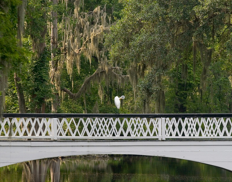 22 - Egret on White Bridge