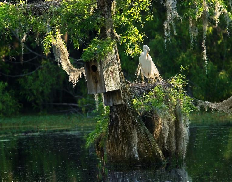 5 - Huffalump tree